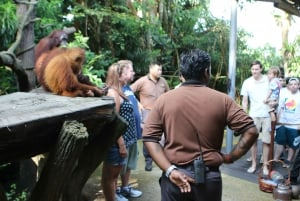 Singapore Zoo Morning Ticket with Hotel Pick-Up