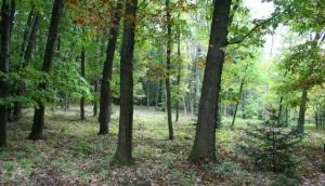 Arboretum Kysihýbel