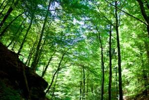 From Bled: Half-Day Pokljuka Gorge Trail Hike