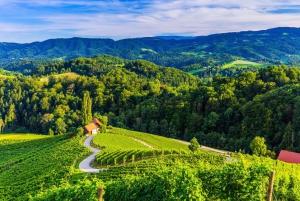 From Ljubljana: Maribor, Ptuj & Heart of the Vineyards
