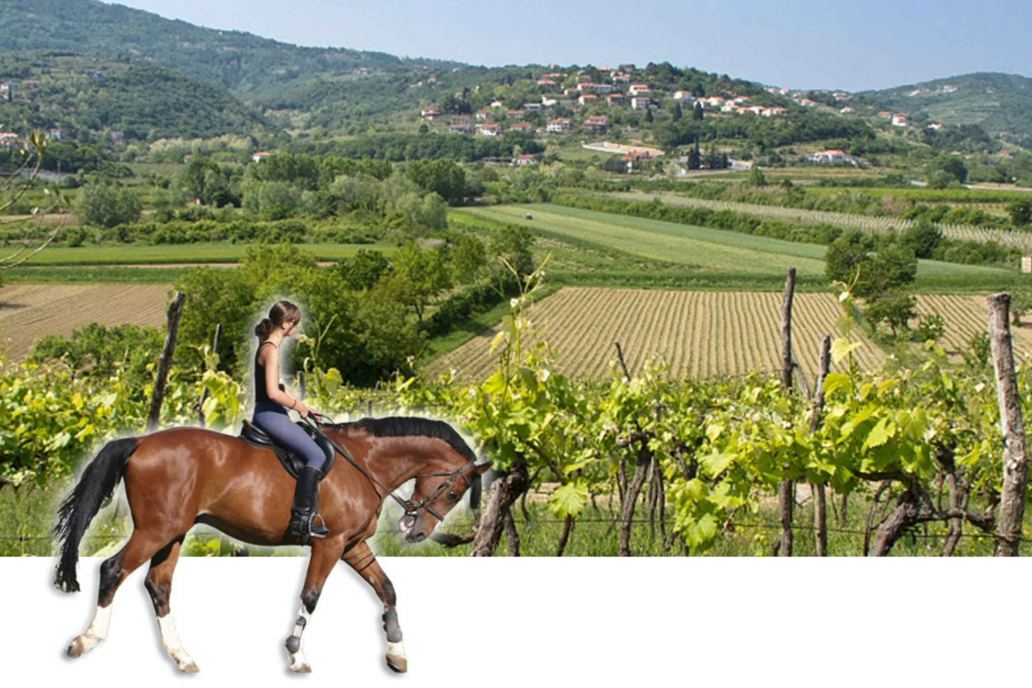 Horses and Vineyards
