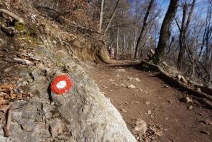 Šmarna Gora: Hiking and Food Tour from Ljubljana