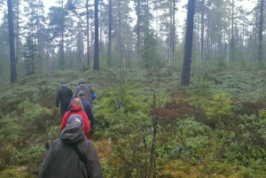 From Stockholm: Wildlife Safari with Campfire Dinner