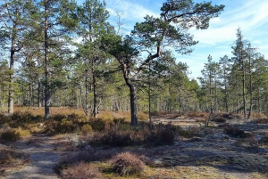 Nature Hike from Stockholm