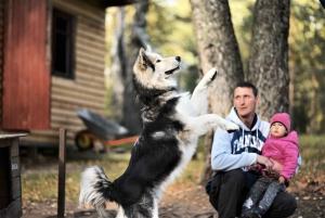 From St. Petersburg: Husky Dog-Trekking and Russian Sauna