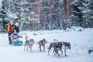 St Petersburg: Husky dog-sledding with Traditional Lunch