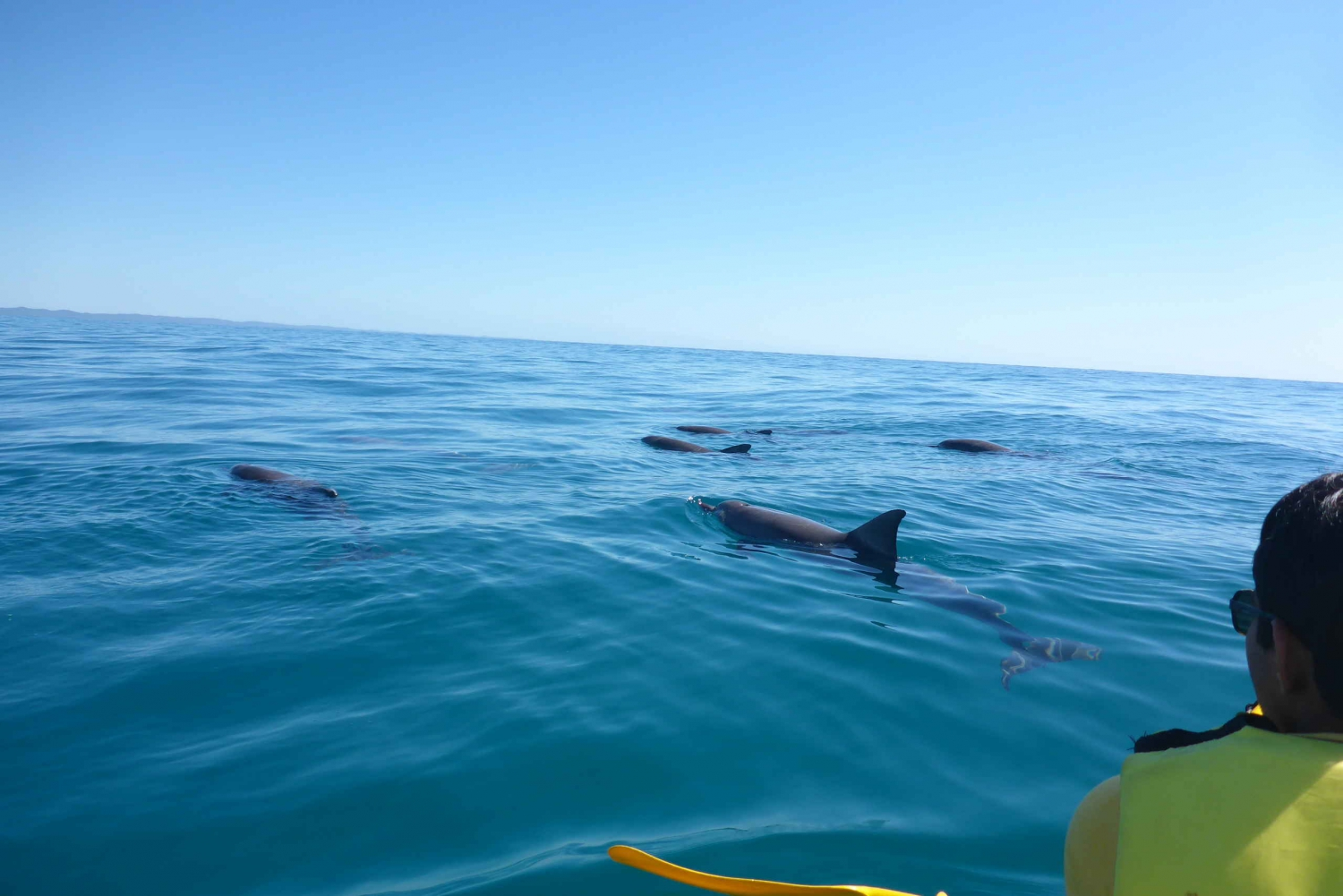 Dolphin View Kayak and Great Beach Drive Tour from Noosa