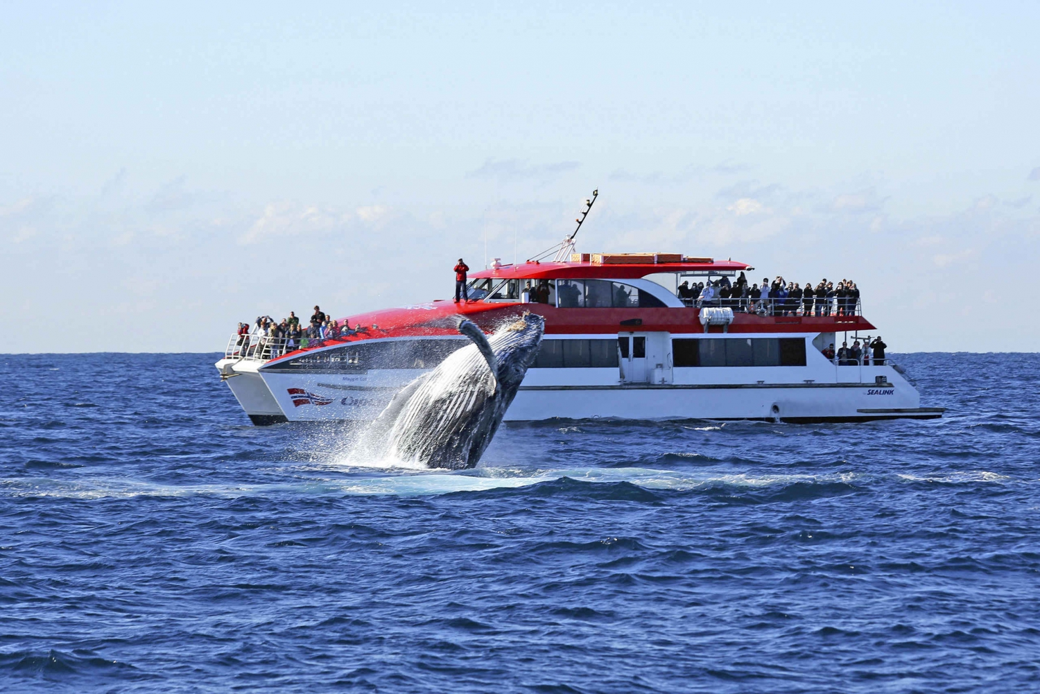 2.5-Hour Whale Watching Cruise