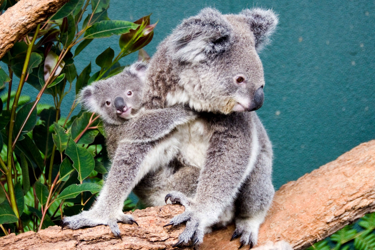 Breakfast with Koalas at WILD LIFE Zoo Darling Harbour