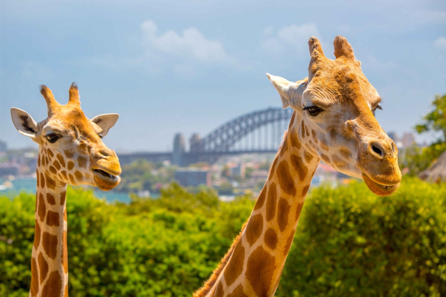 Exclusive 90-Minute VIP Tour of Taronga Zoo