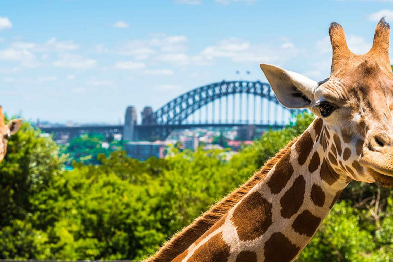 Jet Boat Ride & Water Taxi to Taronga Zoo with Admission