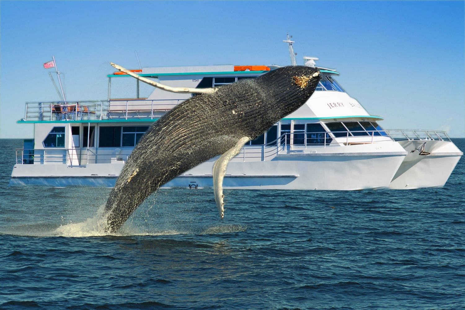 Sydney Whale Watching Cruise with Breakfast or Lunch