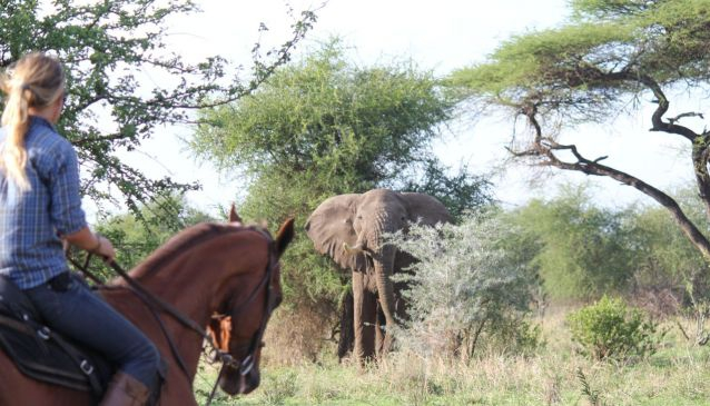 In the Saddle; the True Way to Explore Tanzania