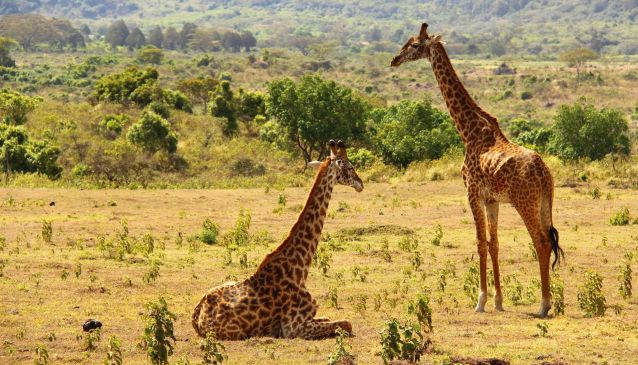 Safari, Shanga and Sundowners in the Serengeti