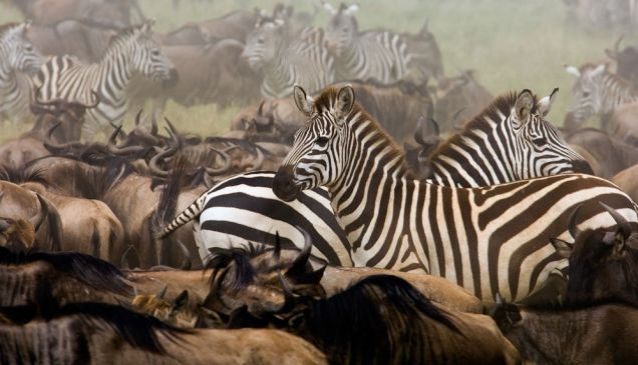 Top 10 National Parks In Tanzania for Game Viewing