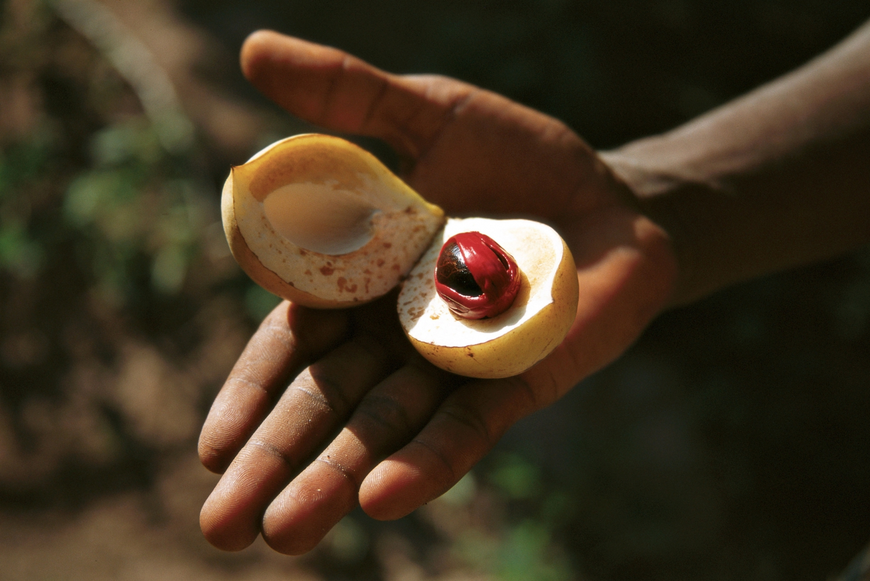 3-hour Zanzibar Spice Tour