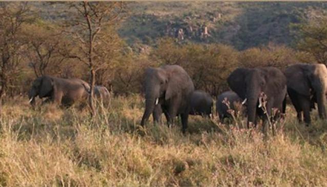 Allen Tanzania Safaris