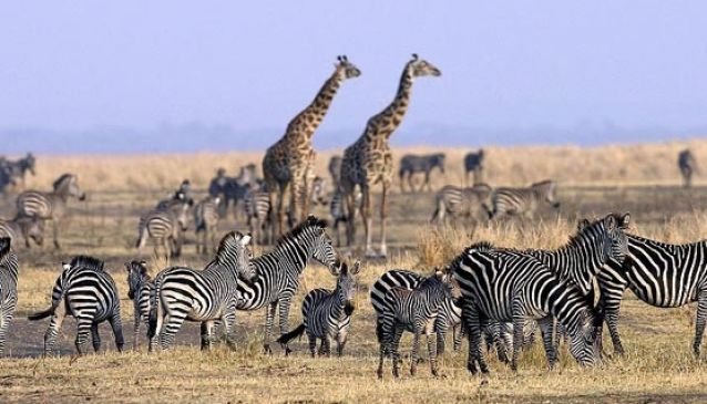 Bless Africa Tours and Safaris