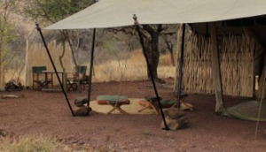Bush2Beach Safaris