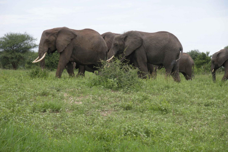 From Arusha: Full-Day Tarangire National Park Tour