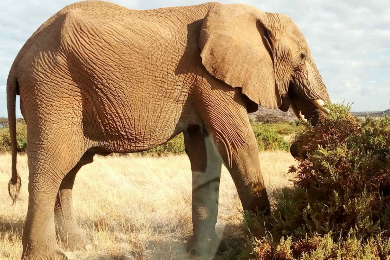 From Arusha: Lake Manyara National Park Full-Day Trip