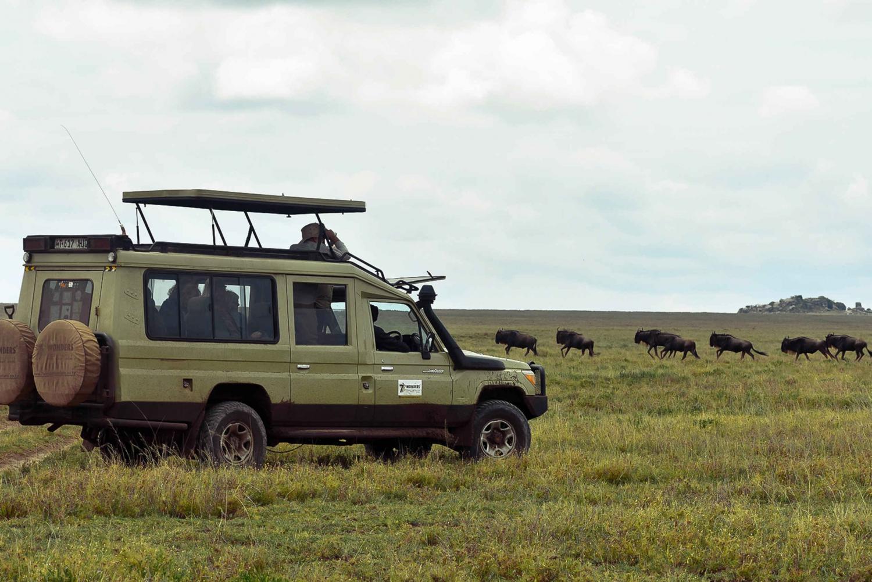 From Mwanza: Serengeti National Park Day Trip