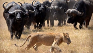 Kiliholidays Tours & Safaris Africa