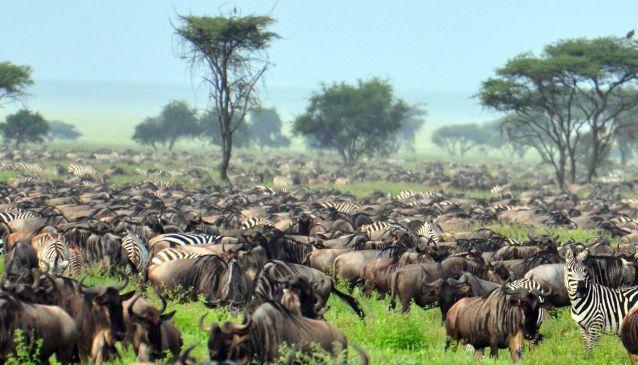 Maasai Flag Expeditions, Ltd