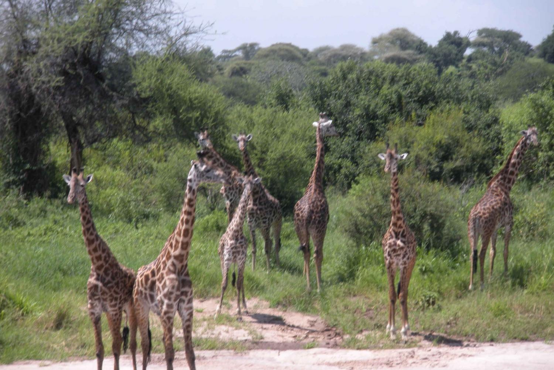 Ngorongoro Full-Day Safari Tour