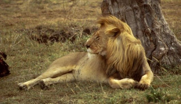Safari Star Tours
