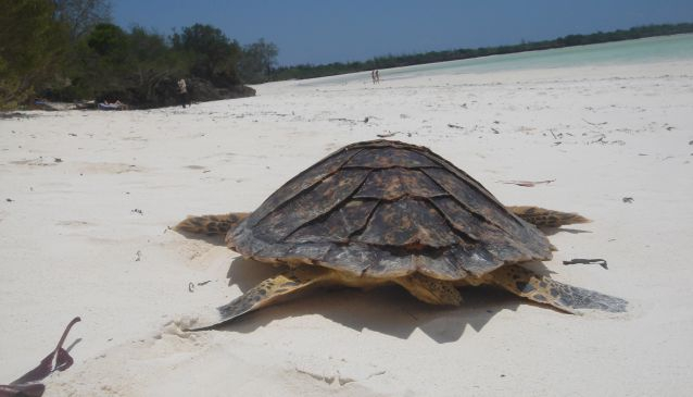 Sea Turtle Conservation Project