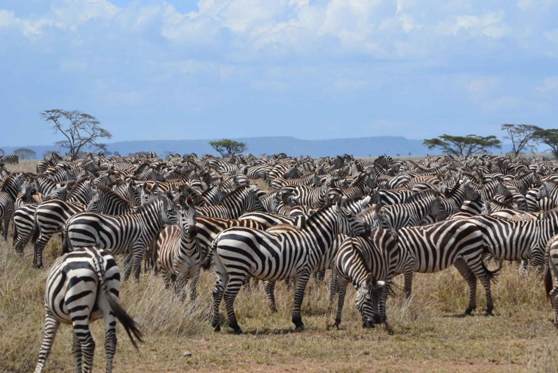 Serengeti and Ngorongoro 5-Day Great Migration Safari