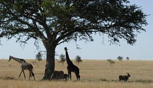 Tanganyika Film and Safari Outfitters