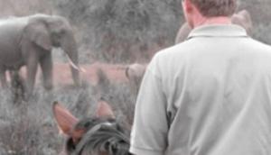 Tanzania Riding Safaris