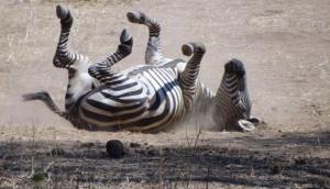 Tatanca Safaris & Tours