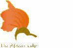 The African Tulip