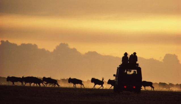 Wildroot Safaris and Adventures