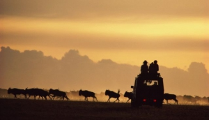 Wildroot Safaris and Adventures