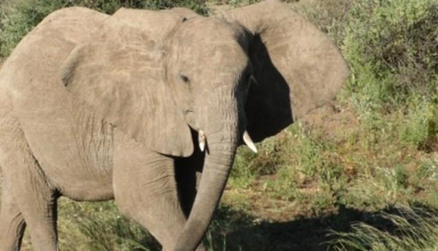 Ziara Safaris