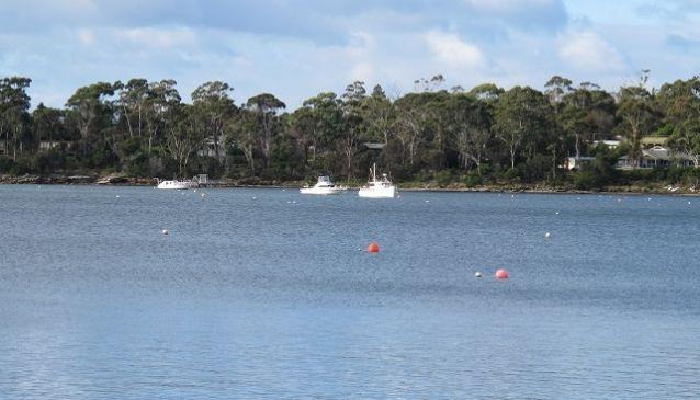 Bluewater Sportsfishing Charters
