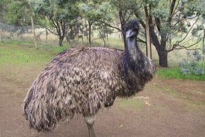 Bonorong Wildlife Sanctuary Half-Day Tour from Hobart