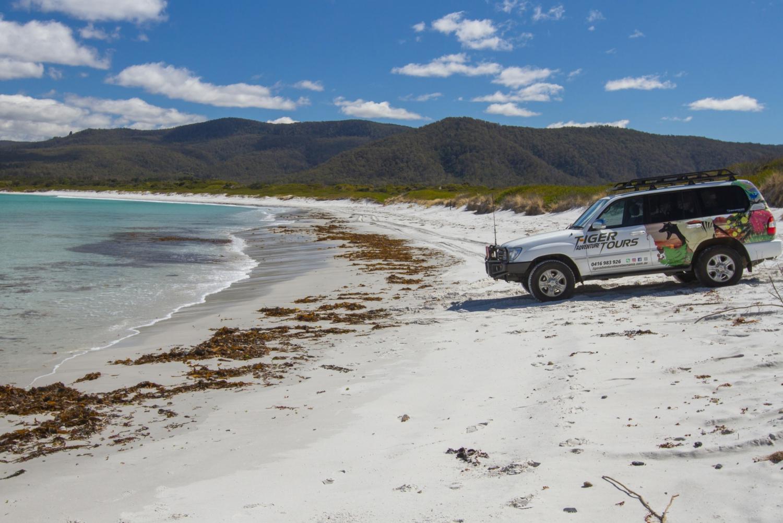 From Bicheno: Tasmanian Coastal Mountain Half Day 4WD Tour