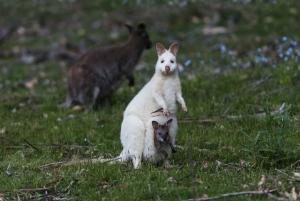 Hobart: Bruny Island Gourmet Wilderness Full-Day Tour