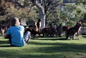Hobart: Full-Day Bonorong Wildlife Sanctuary & Richmond Tour