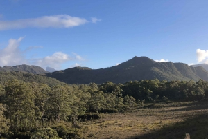 Hobart: Lake St Clair and Western Wilderness Full-Day Tour