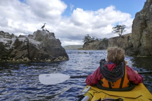 Hobart's Cliffs, Caves and Beaches: 7-Hour Kayak Tour