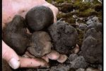 Tamar Valley Truffles