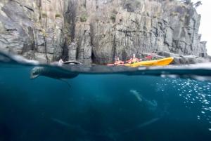 Tasman Peninsula Full-Day Sea Kayak Excursion