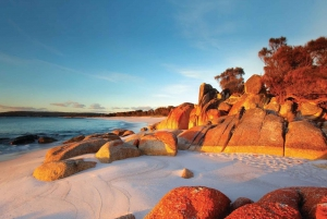 Tasmania in 2 Days: Bay of Fires and Wineglass Bay