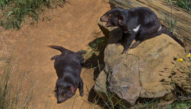Trowunna Wildlife Park